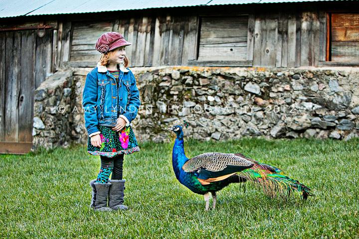 طاووس در روستا